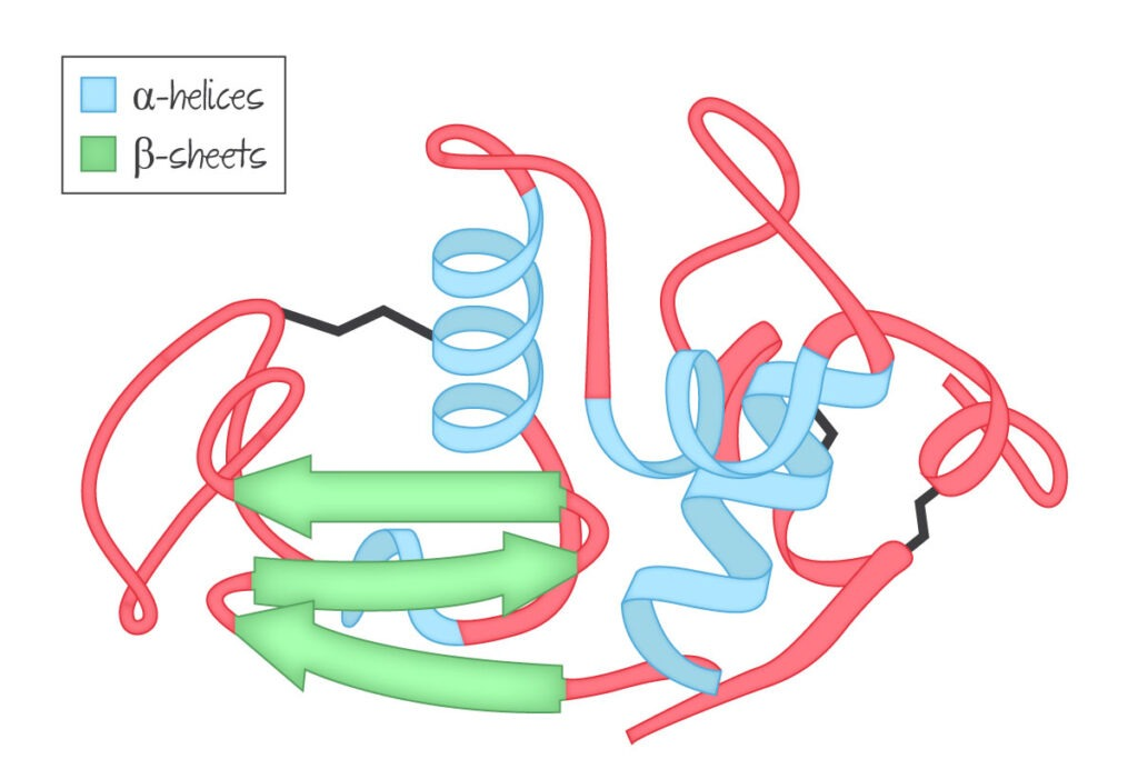 Tertiary structure (proteins)